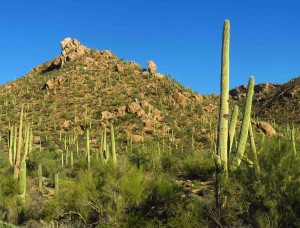 Saguaro National Park, Tucson