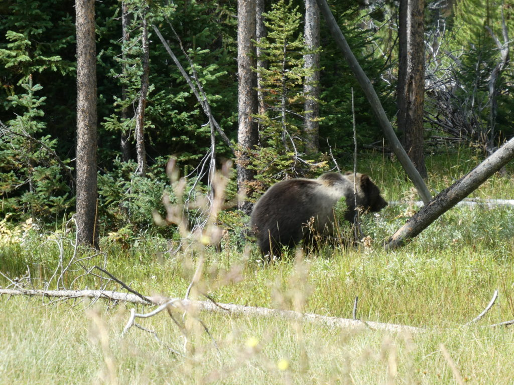 Bear warnings in Grand Teton National Park, USA